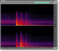 Adobe Audition 2.0 Spectral Frequency Display